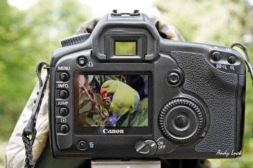 Parrot in the frame of Andy's digital SLR