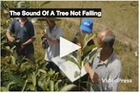 UNDP Forest PSA 'The sound of a tree not falling' by Wildopeneye