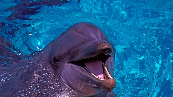 """Portrait of a """"laughing Dolphin"""" by Andy Luck"""