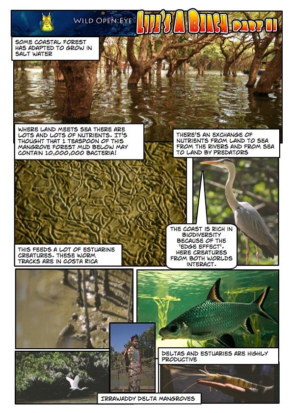 Wildopeneye Mangrove comic page 1