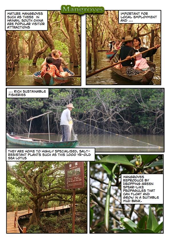 estuaries and mangrovesPage_2