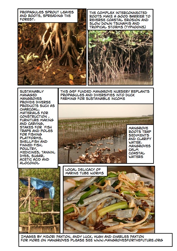 estuaries and mangrovesPage_3