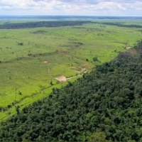 Farming Amazonian Forest For Cattle and Carbon Credits