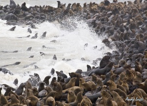 A lot of wildlife such as these sea lions rely on the antarctic food web