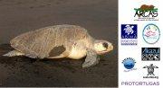 ARCAS helps protect sea turtles on Guatemala's Pacific Coast