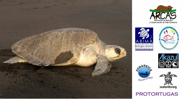 ARCAS helps protect sea turtles on Guatemala's Pacific Coast