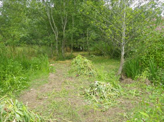The same area along the Eden at Lazonby, after members of the Rock Youth Project from Carlisle had removed the invasive plant Himalayan balsam