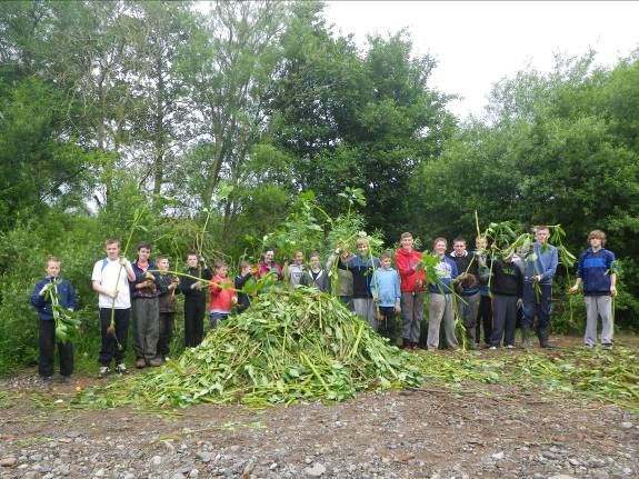 Caldew School pupils clearing Himalayan balsam on the River Caldew at Dalston