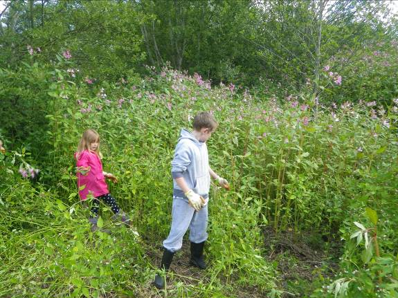 Riverside vegetation before members of the Rock Youth Project from Carlisle removing the invasive plant Himalayan balsam along the Eden at Lazonby