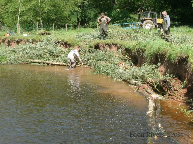 Volunteers using cut logs and branches to stabilise banks and create habitat for wildlife ERT Petteril Project