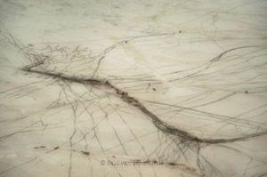 Gemsbok Oryx on trails in the Etosha salt-pan. Image by Paul van Schalkwyk Photography