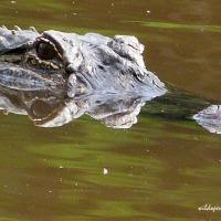 Wild Places: Trinity River Wildlife Refuge