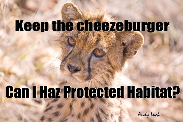 A cheetah with message, Keep the cheezeburger Can I haz protected habitat