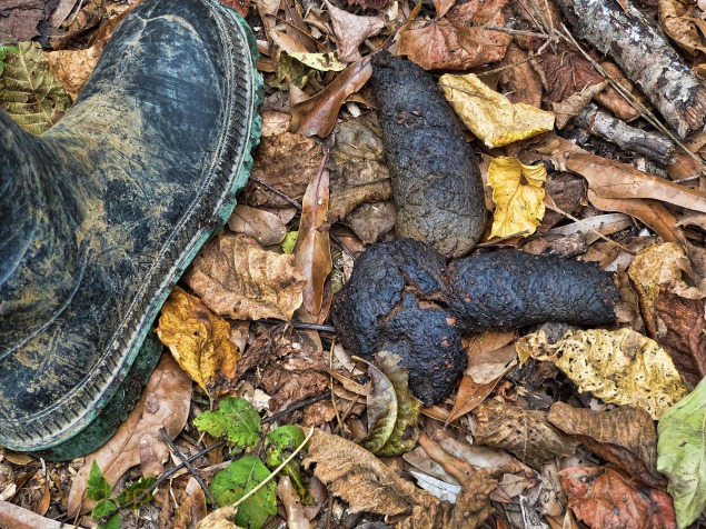 Wildopeneye offers definitive proof that bears do indeed poop in the woods.