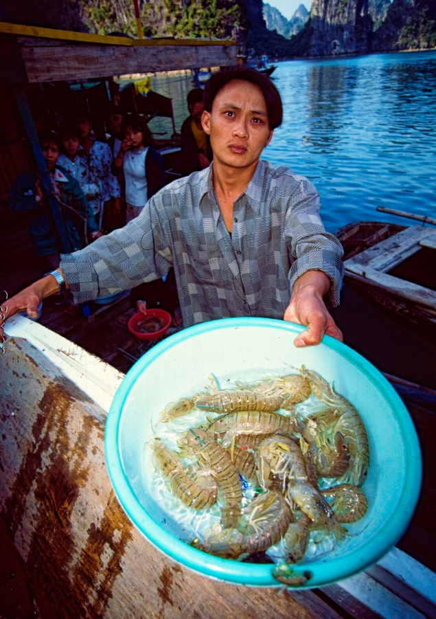 """Prawns from Vietnam's exquisitely beautiful Ha Long Bay. Protected Areas Essential In Preserving Biodiversity that underpins sustainable development, UNDP Delivers """"Parks, people, planet: inspiring solutions"""" at IUCN World Parks Congress"""