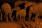 African Elephants like these will likely benefit from the Wildlife Crime Tech Challenge that offers over $500 thousand awards to stimulate innovative responses against Wildlife Crime. Andy Luck photo,