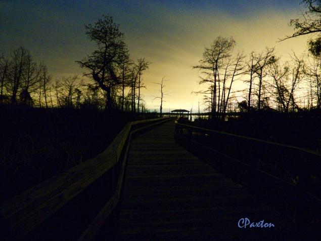 Black Bayou NWR at night. Frogs call most vociferously at dusk and calls tail off later in the evening.