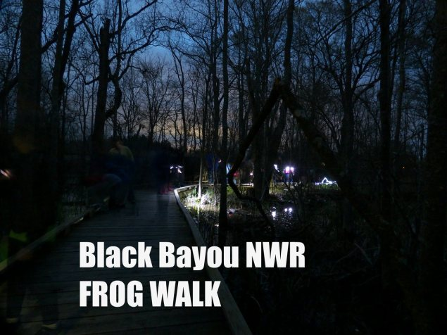 People walking the Black Bayou trails on guided Frog Walk.