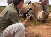 Steve Toon photographing rhino surgery