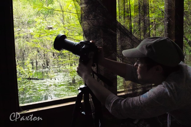Photographing birds from a well-situated hide at Rainey Lake.