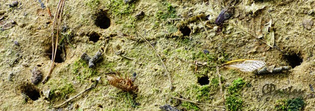 Cicadas emerged from these burrows in the sandy ground.