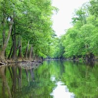 Tales From The Riverbank:  Exploring Bayou Deloutre by Kayak
