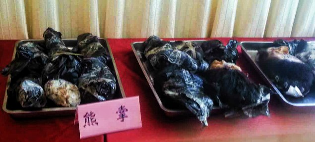Bear paws confiscated in China's largest Wildlife smuggling 'sting' operation to date.