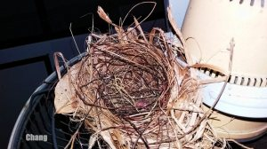 A closer view of the bird's nest in an electric fan photographed in Bangkok , Thailand. Chang Htoo photo and copyright.