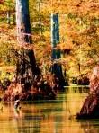 Autumn colour on Bayou D'Arbonne