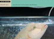 "Cover of the new Traffic and IUCN report ""HUMPHEAD (NAPOLEON) WRASSE Cheilinus undulatus trade into and through Hong Kong"". Front cover photograph and credit: Humphead (Napoleon) Wrasse Cheilinus undulatus in Hong Kong. ©Joyce Wu"