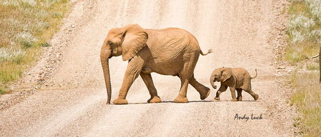 Wildlife Crime is getting personal with wildfor.life campaign. Pictured here, are Andy Luck's Desert Elephants, Copyright Andy Luck