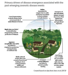 Primary drivers of zoonotic disease emergence- UNEP image and copyright.