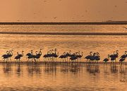 Flamingos at dusk photo and copyright Andy Luck.