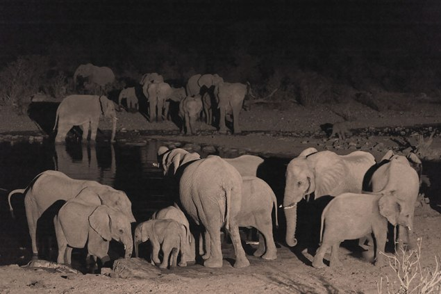 Elephants in Etosha by Andy Luck