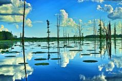 Peace of paradise! Another dreamlike view of  reflected sky and clouds at Black Bayou National Wildlife Refuge in Monroe, North Louisiana. C. Paxton image and copyright.