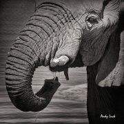 Elephant image and copyright Andy Luck.