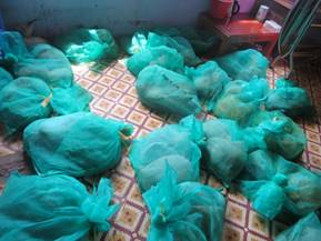 Illegally trafficked pangolins confiscated from the Ambulance Man's criminal network. ENV image and copyright.