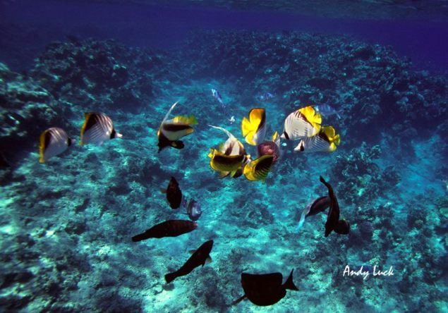 Fish and Jellyfish over Carribbean reef coral. Image and copyright Andy Luck.