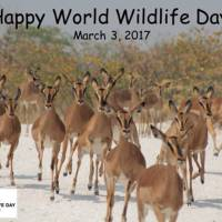 Celebrating World Wildlife Day