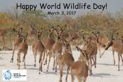 Happy World Wildlife Day 3/3/2017