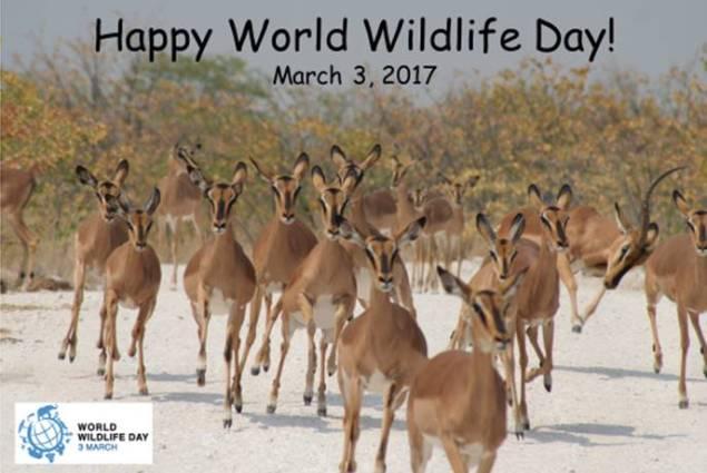 Happy World Wildlife Day 3/3/2017