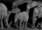 Elephants at a waterhole in Namibia's Etosha National Park.