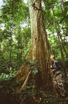 With buttress roots rainforest trees support themselves in very thin tropical topsoils.