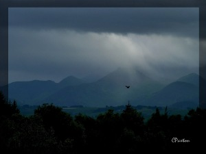 A buzzard soaring over Lakeland with light breaking through the clouds. C.Paxton image and copyright.