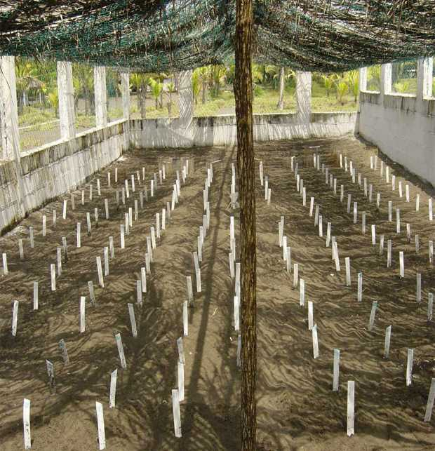 ARCAS sea turtle hatchery on the Pacific coast of Guatemala at Biotopo Hawaii. ARCAS image and copyright.