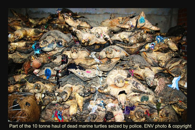 Part of the 10 tonne stockpile of dead sea turtles seized in Vietnam in 2014. ENV image and copyright.