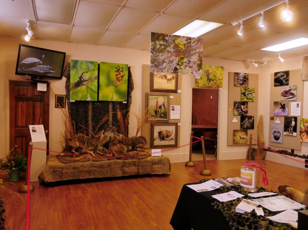 Alan Futch, Dean of Flowers, has again amazed us and produced an exciting layout of varied high quality art work from a range of talented artists, this time on a natural theme