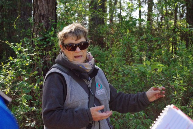 Dr. Bette Kauffman showing an American Beautyberry bush , while guiding the bioblitz with Dr. Bob Thomas.