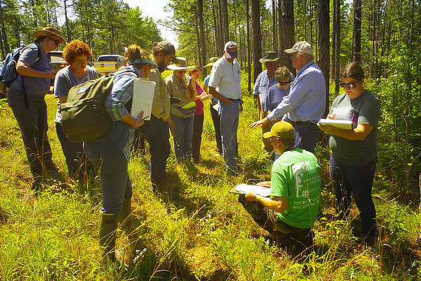 Kisatchie National Forest's rich botanical diversity being explored by Louisiana Master Naturalists' Plant Workshop with Dr. Charles Allen. 2018