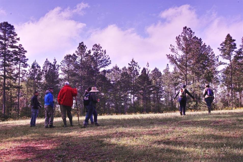 Naturalists examining the site of a natural seep, with bog plant community, Louisiana Master Naturalists Rendezvous 2018 at Louisiana Master Naturalists Rendezvous 2018